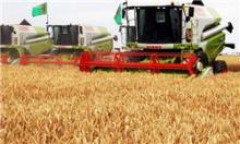 خرید تضمینی گندم در نهاوند انجام شد / قیمت هر کیلو 1160 تومان